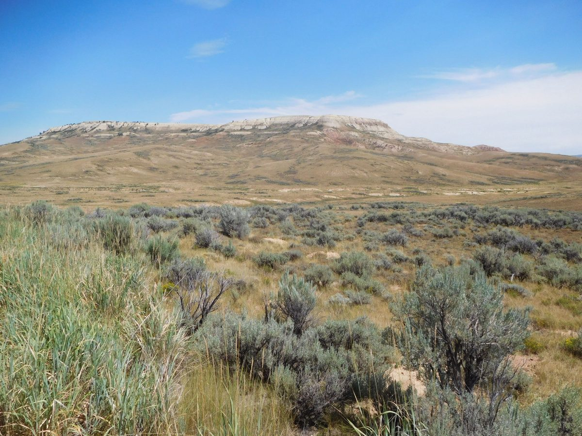 Exploring Wyoming's Fossil Butte National Monument