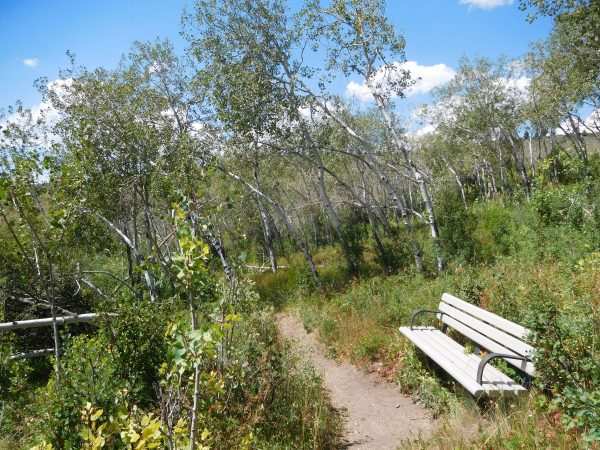 The Nature Trail goes through a grove of aspens that are fed from a spring